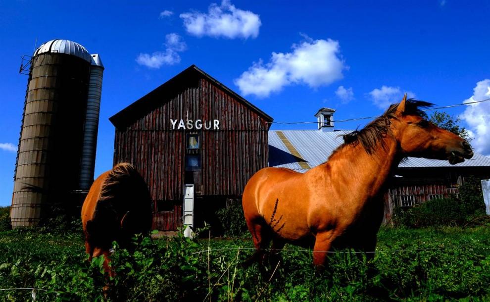 14) Лошади пасутся у сарая, который находится на ферме Ясгуров, рядом с которой 40 лет назад прошел легендарный музыкальный фестиваль Вудсток. (Stephen Chernin/AP)