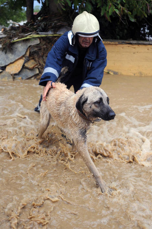 2) Мужчина спас собаку в Тракийском районе Стамбула.