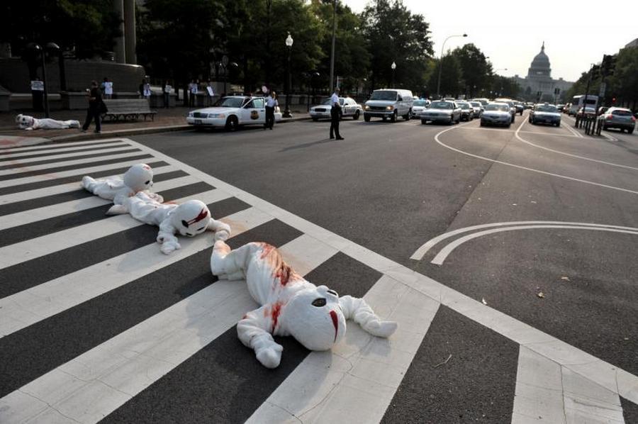 """1) Члены организации """"Люди за этичное обращение с животными"""" (PETA) в костюмах тюленей перекрыли движение на Пенсильвания авеню перед посольством Канады в ходе демонстрации протеста против ежегодной охоты на тюленей в Канаде. Снимок сделан в Вашингтоне 16 сентября 2009 года. (UPI/Kevin Dietsch)"""