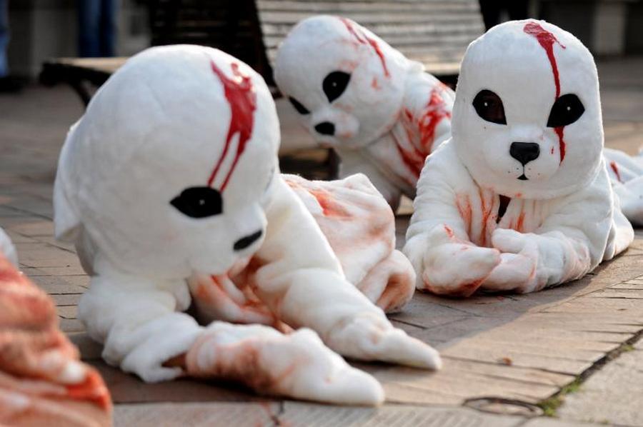 2) Активисты PETA изображающие тюленей у здания посольства Канады, призывают прекратить ежегодную охоту на тюленей. (UPI/Kevin Dietsch )
