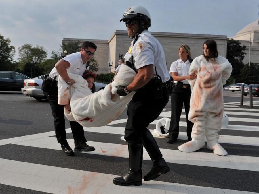 5) Задержание активистов организация PETA полицией. Кстати, В марте 2009 года Россия ввела полный запрет на добычу в стране детенышей гренландских тюленей возрастом до одного года. В то же время в Канаде этом году охотникам на тюленей разрешено убить более 338 тысяч животных.