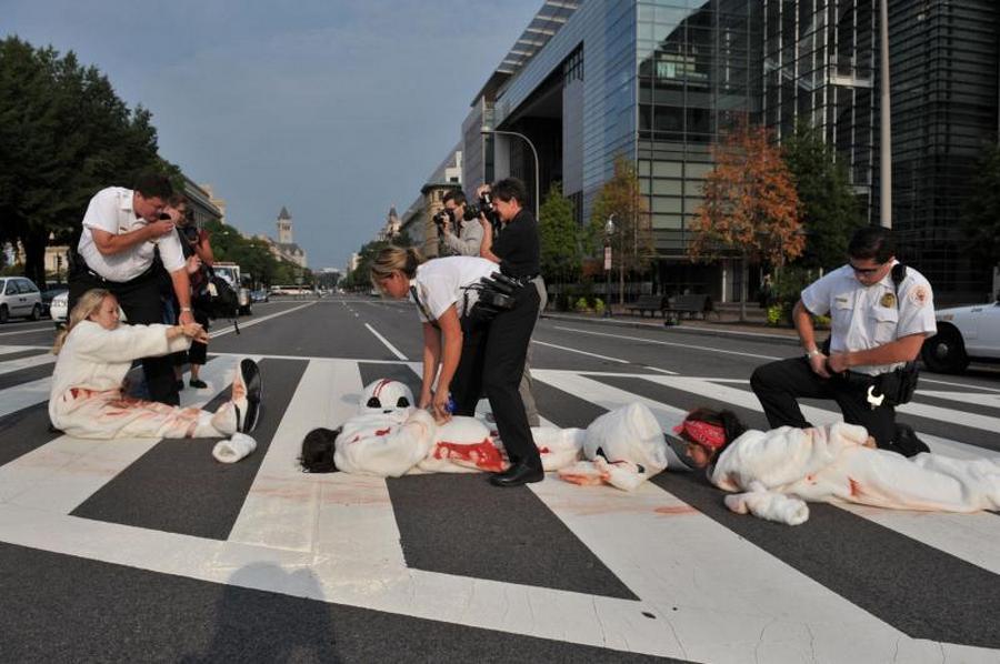 8) Акция организации защиты прав животных PETA в рамках проекта борьбы за жизнь детенышей тюленей, убиваемых в Канаде. (UPI/Kevin Dietsch)