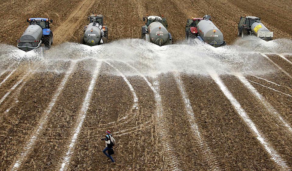 5) Производителей молока вылили на поле вблизи бельгийского городка Сине 790 тысяч литров молока в знак протеста против низких цен на молочные продукты, которые, как они утверждают, направлены на разорение фермеров. Фермеры требуют поднятия цен на молоко. (Francois Lenoir/Reuters)