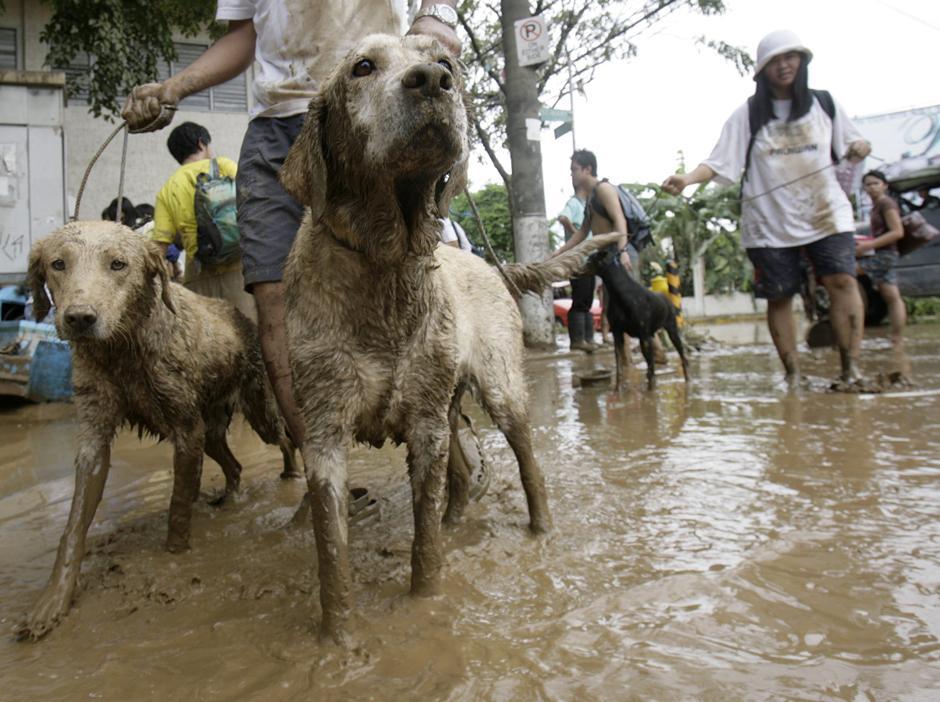 17) Жители эвакуируют своих собак после внезапного наводнения, вызванного тайфуном. Снимок сделан в городе Марикина, округ Манилы.