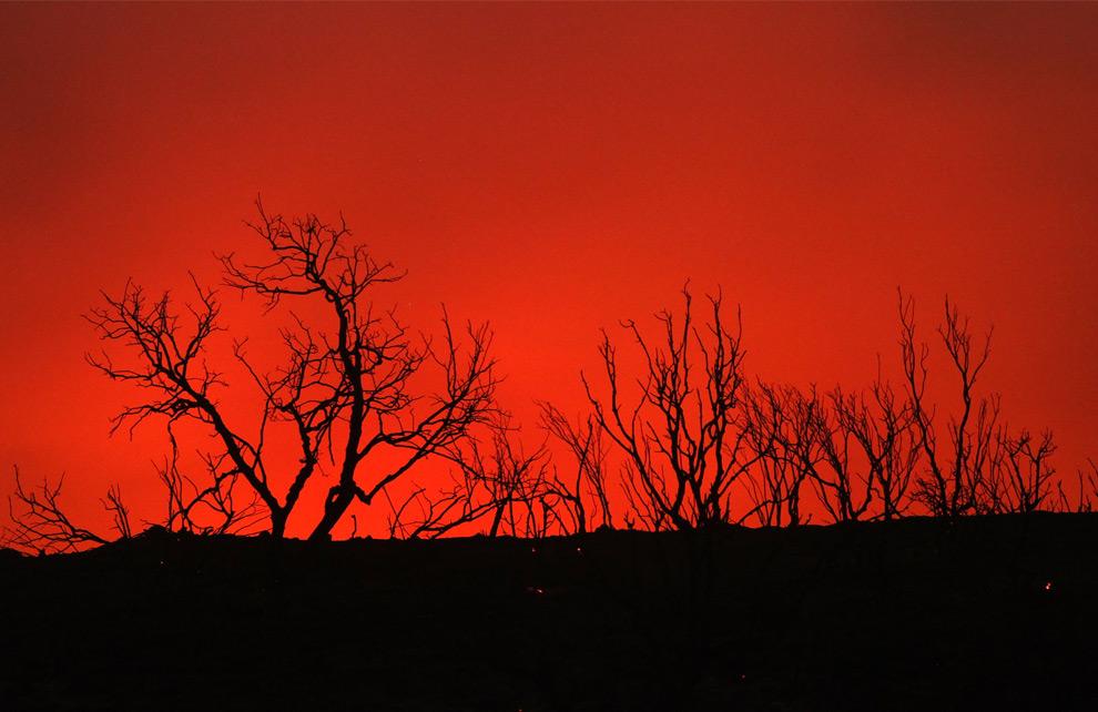 14. Силуэты обугленных деревьев на фоне света от пламени лесного пожара 30 августа 2009 года в Актоне, штат Калифорния. (Justin Sullivan/Getty Images)
