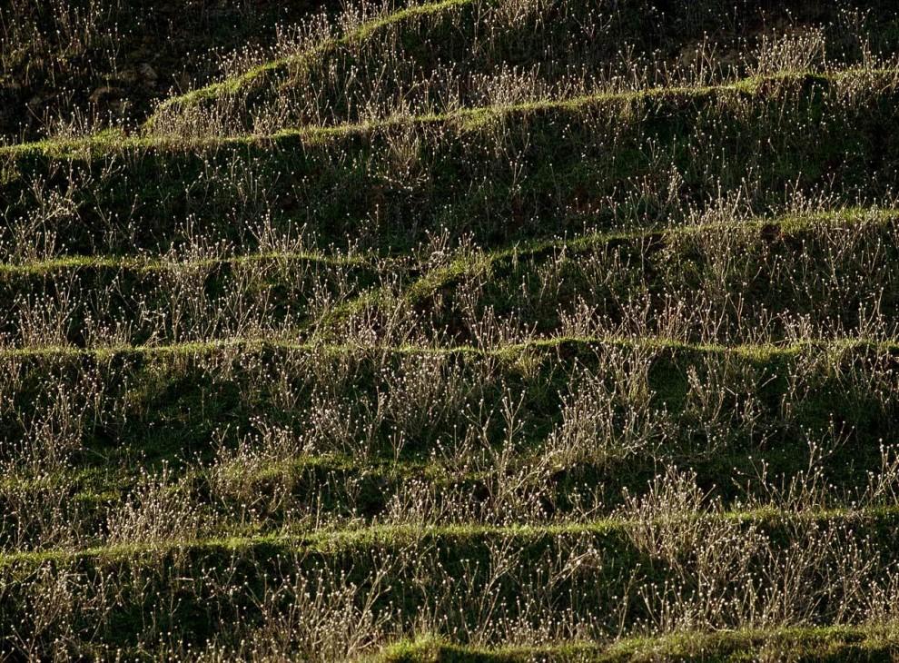 2) Цветы на холме изрезанном козьими тропами в региональном парке Брионес в Калифорнии.