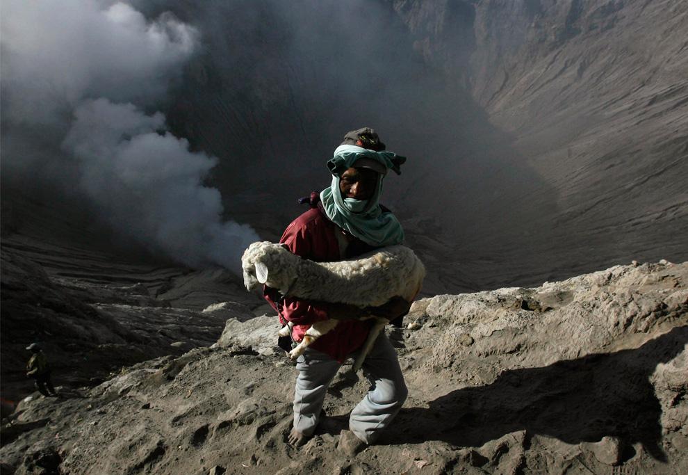36. Житель деревни несет ягненка, которого он достал из кратера вулкана во время ритуала в честь фестиваля Касада на горе Бромо в индонезийской провинции Восточной Явы 6 сентября 2009 года. (REUTERS/Sigit Pamungkas)