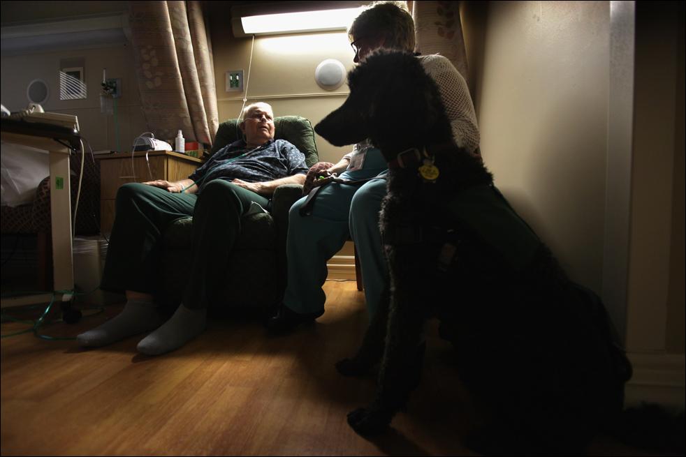 14. 87-летний Орвилл Кларк с добровольцем и собакой Бейли в хосписе Святого Иоанна 20 августа в Лейквуде, штат Колорадо. Специальных собак приводят сюда всю неделю, чтобы помочь некоторым пациентам справиться с волнением. (Getty Images/John Moore)