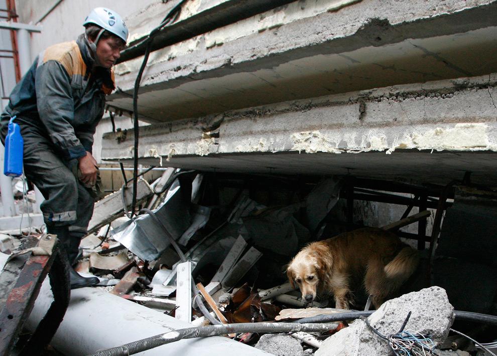 10. Спасатель и собака ищут жертв в обломках разрушенной Саяно-Шушенской ГЭС 20 августа 2009 года. (REUTERS/Ilya Naymushin)