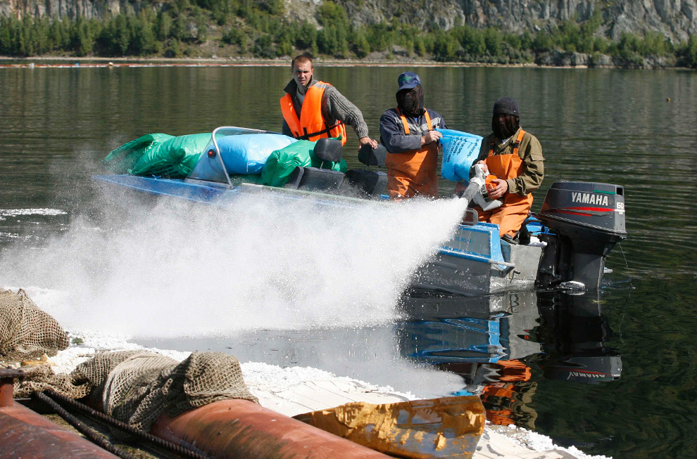 21. Рабочие сдерживают утечку масла в реку Енисей недалеко от поселка Майна, Россия, 19 августа 2009 года. (REUTERS/Ilya Naymushin)