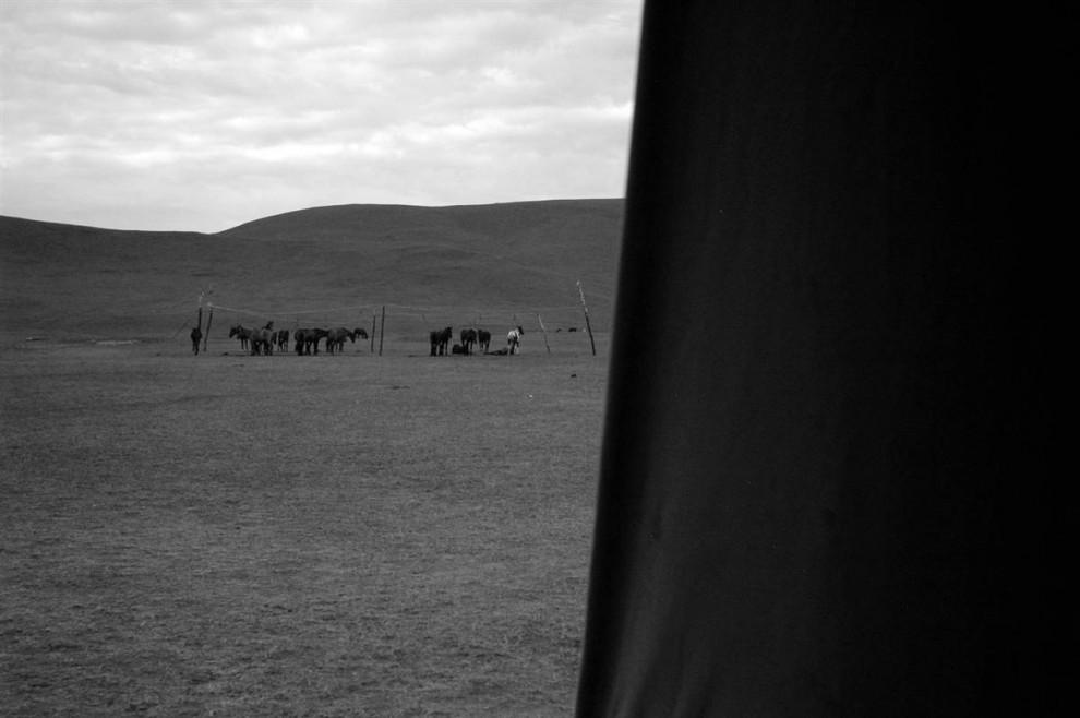 14. Монгольские лошади – одни из самых выносливых пород лошадей. Им приходится адаптироваться к сухому климату Монголии, который может изменяться от крайне жаркого до крайне холодного, ведь их держат под открытым небом круглый год. (David Lon/NBC News)