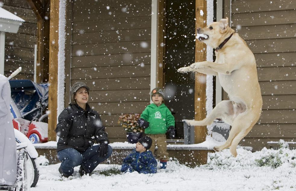 6) Ким Данн, слева и ее сыновья, Хайден, в центре, и Питер играют со своей собакой Гордоном перед домом в Крестед Бют, штат Колорадо во время снегопада в Скалистых горах Колорадо 21 сентября. Последний день лета принес снег и по всему штату Колорадо. (AP/Nathan Bilow)