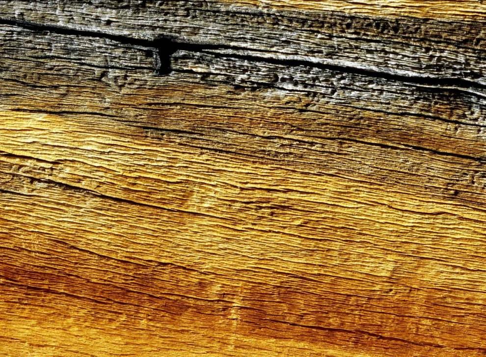 9) Белокорая сосна (Pinus albicaulis), которая растет в западной части США и Канаде.