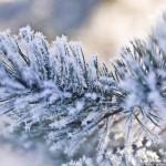 Снежная Карелия