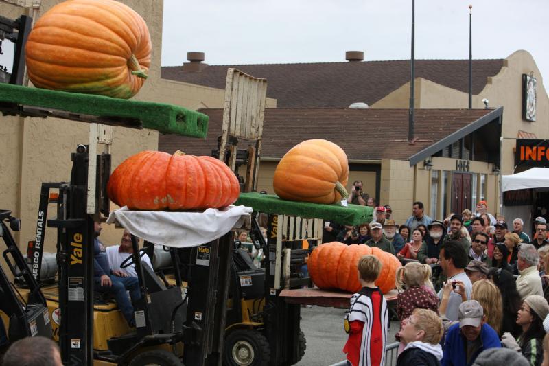 7) Четыре большие тыкв выставлены на конкурсе красоты на Конкурсе на самую большую тыкву в Хаф Мун Бей 12 октября 2009 года. (UPI/Terry Schmitt)