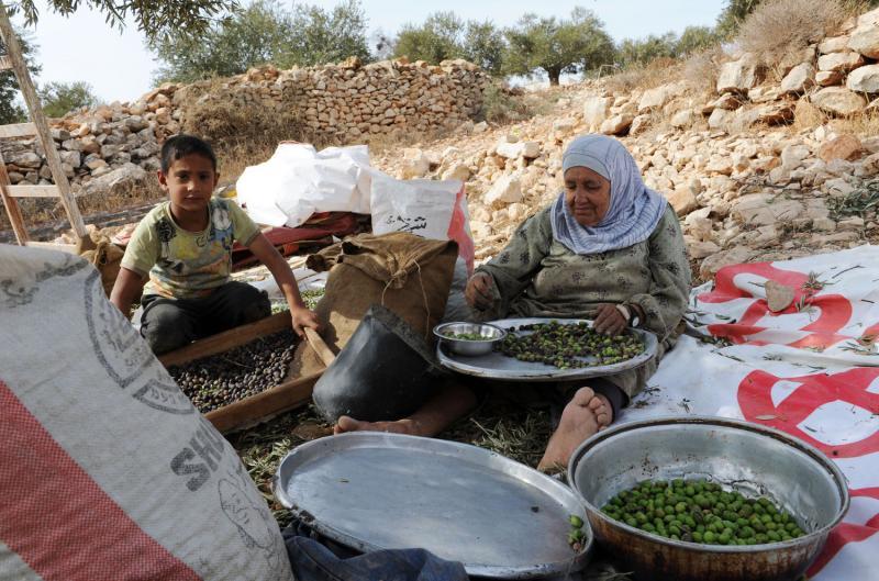 9) Пожилая палестинка выбирает листья из собранных оливок в ходе ежегодного сбора урожая в оливковых рощах местечка Сильвад на Западном берегу. (UPI/Debbie Hill)
