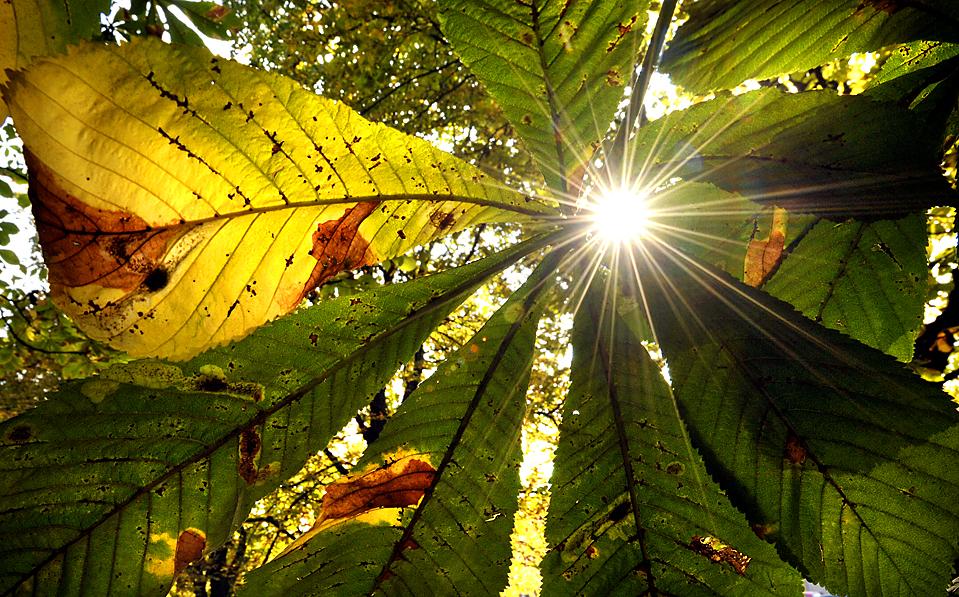3) Солнце светит сквозь листья в Людвигсбурге, Германия. (Sascha Schuermann/Agence France-Presse/Getty Images)