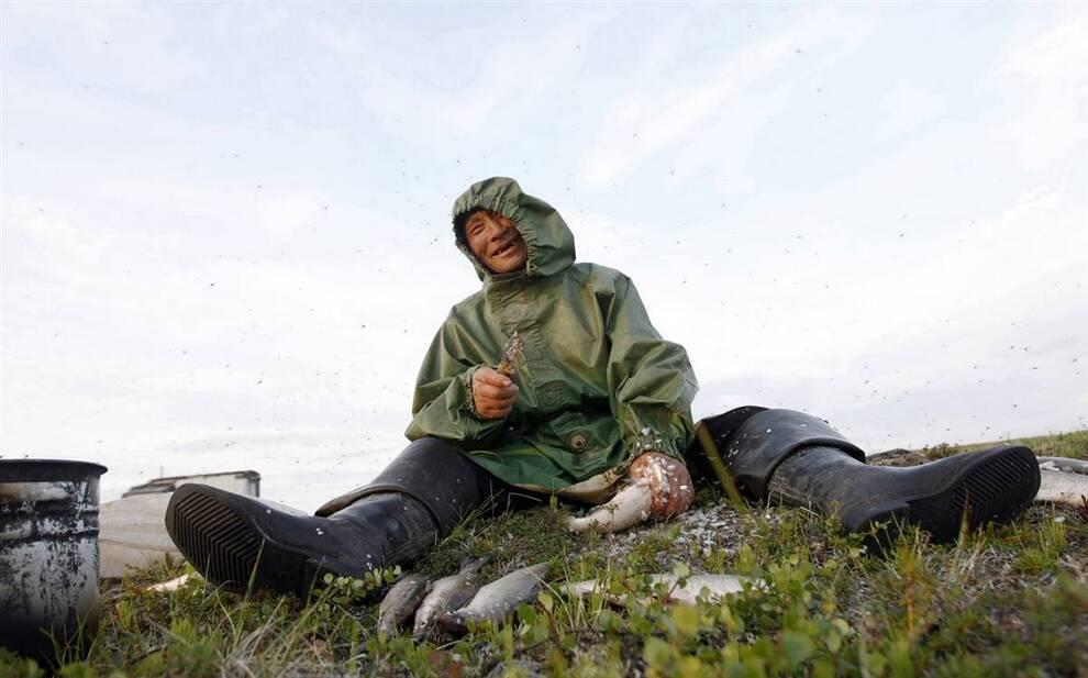 9. Ненецкий народ полностью зависит от северных оленей и рыбы. Местные жители говорят, что получают всего 66 долларов государственной помощи в месяц; они просят энергетические компании засыпать трубы и запретить своим сотрудникам незаконно охотиться на оленей на ненецкой земле. (Denis Sinyakov/Reuters)