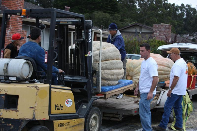 9) Рабочие передвигают гигантские тыквы для взвешивания. (UPI/Terry Schmitt)