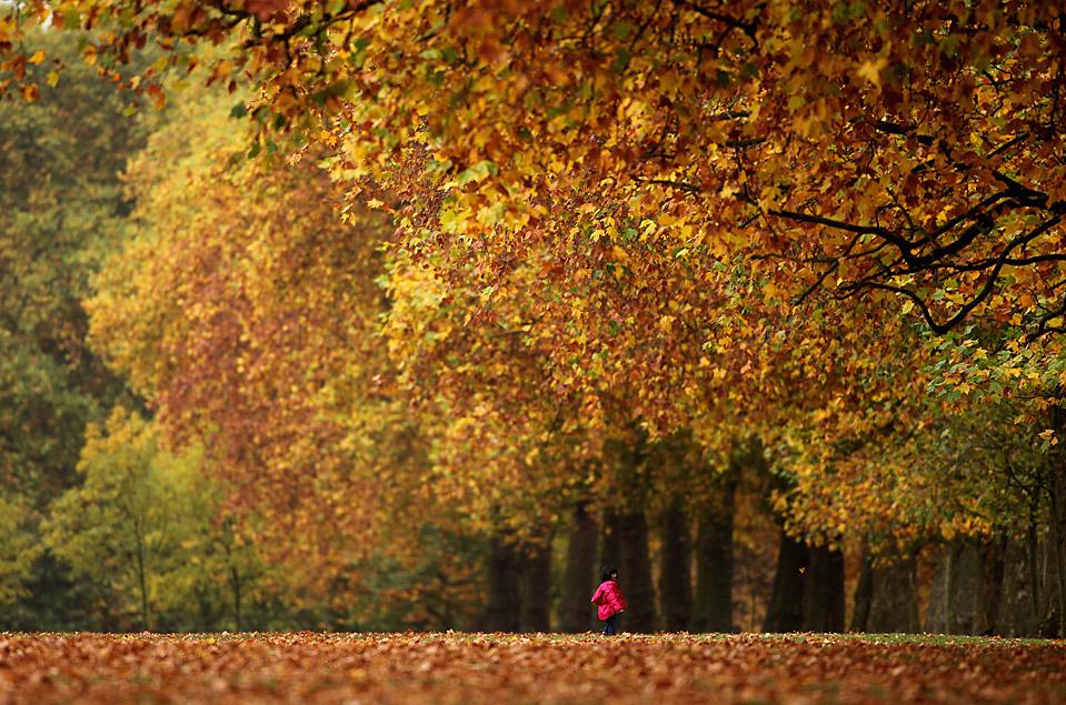 3. Ребенок бежит по опавшим листьям в лондонском Гайд-парке. В этом году здесь выдалась невероятно теплая осень. (Dan Kitwood/Getty Images)