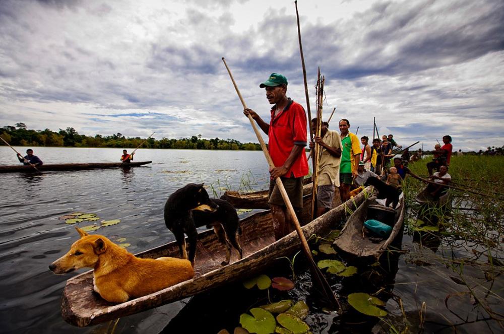 14. Охота на дикого кабана и казуара в отдаленных областях вдоль берегов озера Мюррыэ, Папуа — Новая Гвинея, 1 января 2009 года. Эти сообщества живут в единении с природой. Они охотятся, ловят рыбу и занимаются сельским хозяйством, но всегда делают это в полной гармонии с природой. Они прогнали отсюда малазийских лесорубов, наносивших вред окружающей среде. (Brent Stirton/Getty Images)