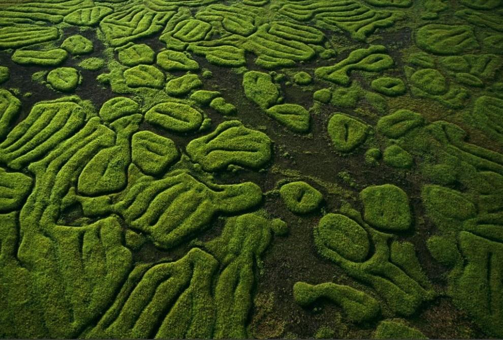 6) Возвышающиеся над поверхностью земли террасы в северной части Конго – возможные следы культивации земель в далеком прошлом. (Michael Nichols)