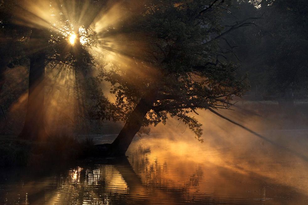 2. Утреннее солнце прорывается сквозь деревья на свежем осеннем воздухе в Данхэм Массей 12 октября в Алтринчеме, Англия. Короткие дни и понижение температуры знаменуют сезон оленей и прекрасный осенних расцветок листвы. (Getty Images / Christopher Furlong)