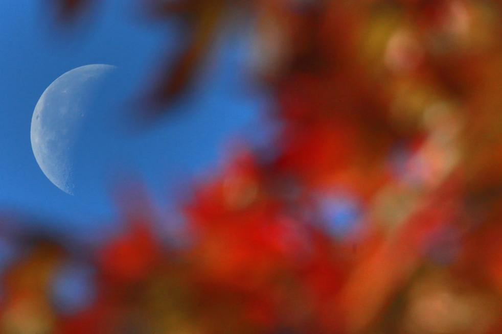 6. Луна видна из-за деревьев в парке Виктория, где первые солнечные лучи уже начали прорываться сквозь меняющую цвет листву. (Getty Images / Matt Cardy)