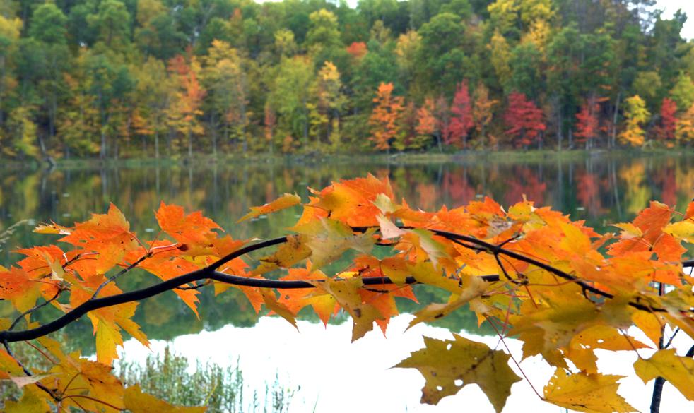 8. Кленовые листья меняют цвет на берегу озера Бьюти в лесу Пиллсбери  к северу от Пиллагера, штат Миннесота, в понедельник 5 октября. На той неделе цвет листвы на деревьях Миннесоты достиг своего апогея. (AP / Steve Kohls)