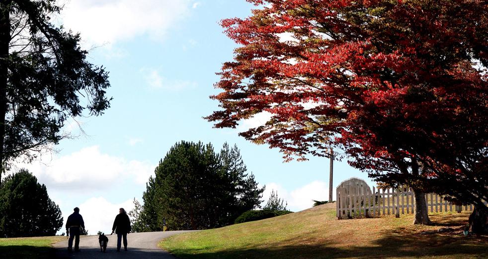 11. Парочка идет к историческому кладбищу в Порт Гэмбл, Вашингтон, в понедельник 5 октября. Листья в этом районе уже начали переливаться всеми красками осени. (Kitsap Sun / Larry Steagall)