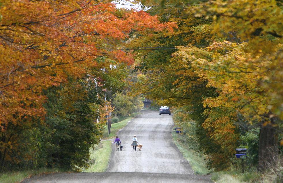13. Люди выгуливают собак вдоль дороги под покрывалом осенней листвы в Вэйтсфилде, штат Вермонт, в пятницу 9 октября. (AP / Toby Talbot)
