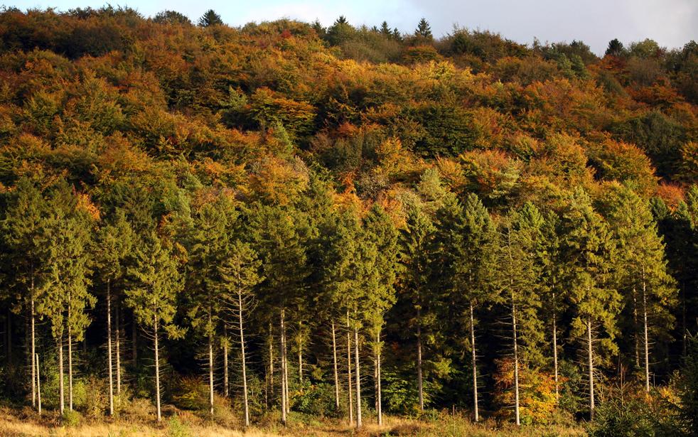14. Лиственные деревья во всей красоте осенних красок в лесах Вендовер 11 октября в Бакингемшир, Англия. Эти леса расположены на северном окончании уступа Чилтерн, они охватывают 325 гектаров хвойных и широколиственных лесов. (Getty Images / Oli Scarff)