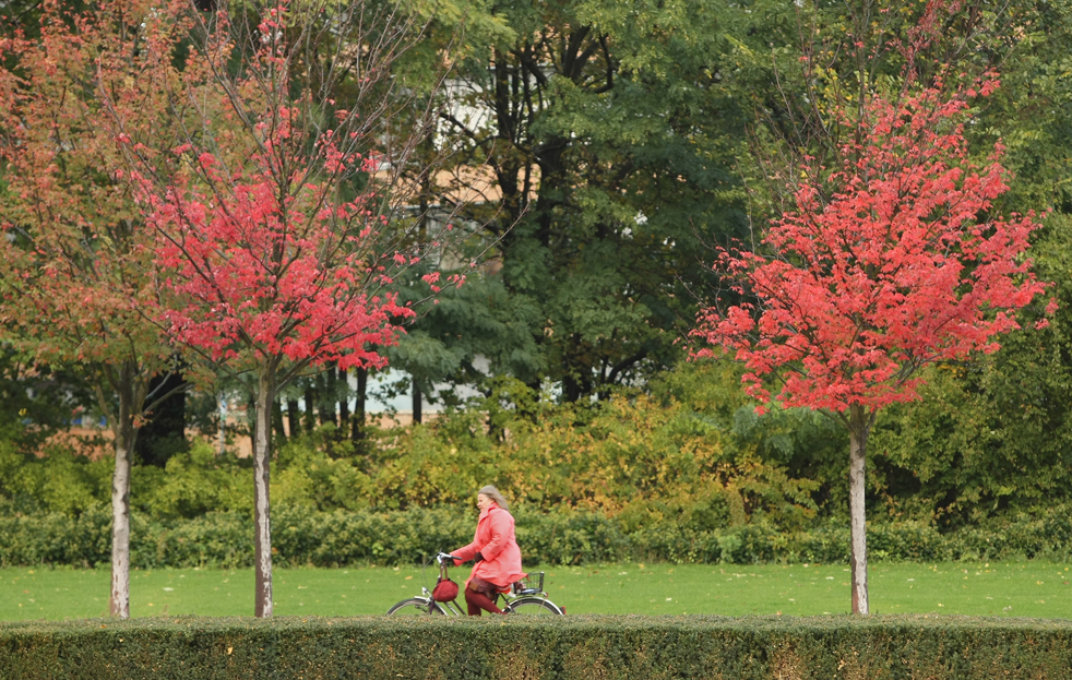 15. Женщина проезжает на велосипеде мимо прекрасных осенних деревьев 12 октября в Берлине, Германия. Осень добралась до Германии, а на этой неделе в южной Германии уже предсказывают первый снег. (Getty Images / Sean Gallup)