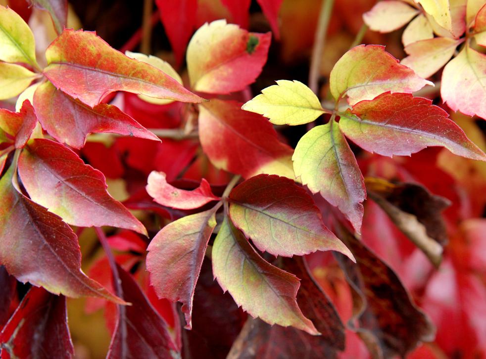 foliagef Оттенки осени