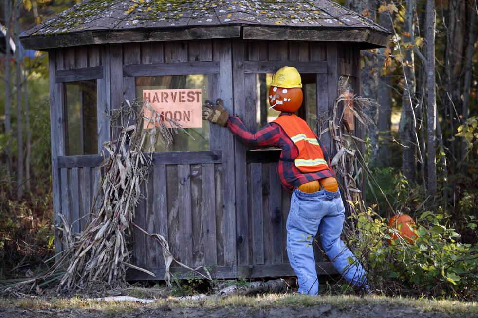 14. Хэллоуинский манекен стоит у дороги на потеху водителям 23 октября в Фрипорте, штат Мэн. (AP / Robert F. Bukaty)