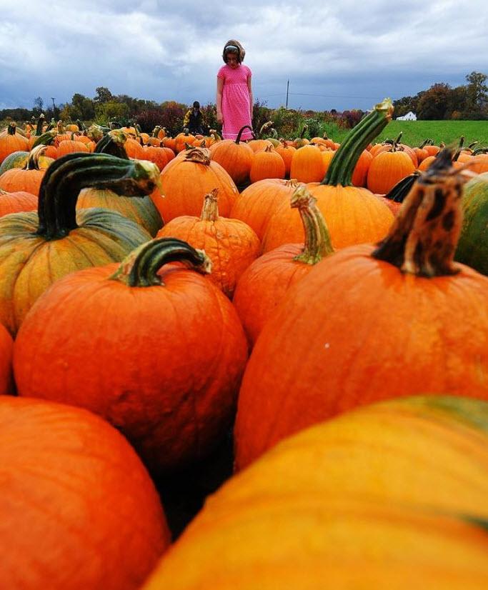6. Девочка с братом выбирают тыквы на местной ферме в Калвертоне, штат Мэриленд, 24 октября. (Jewel Samad, AFP / Getty Images)