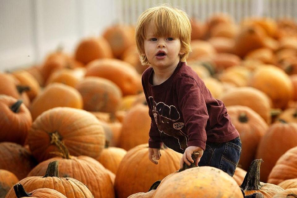 12. Мальчик пробирается через тыквы на тыквенной ферме 22 октября в Истоне, штат Мэриленд. (Jim Watson, AFP / Getty Images)