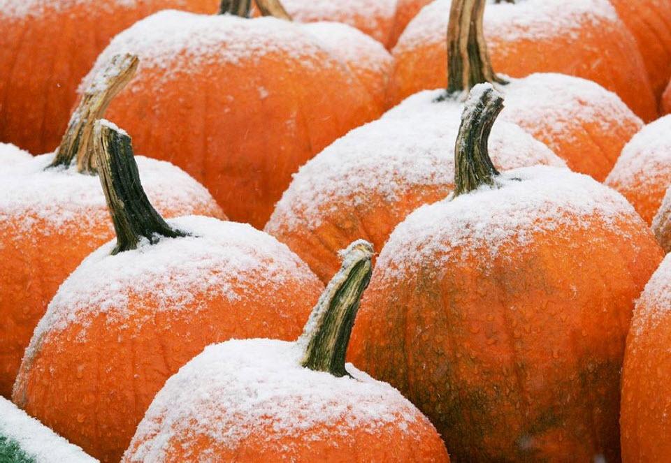 16. Тыквы в повозке на ферме Хэнсонов занесло ранним осенним снегом в Фрамингэме, штат Массачусетс, 16 октября. (Bill Sikes, AP)