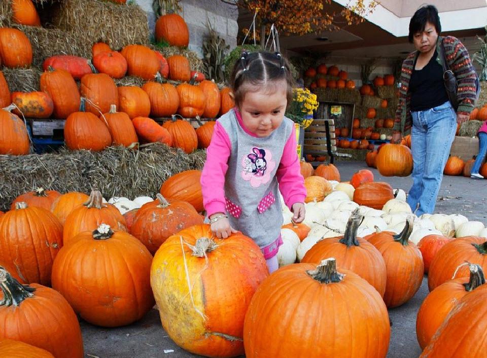 17. Двухлетняя Шейла Посадас из Чикаго выбирает подходящую тыкву на рынке (Fresh Farms) в Чикаго 18 октября. (Nam Y. Huh, AP)