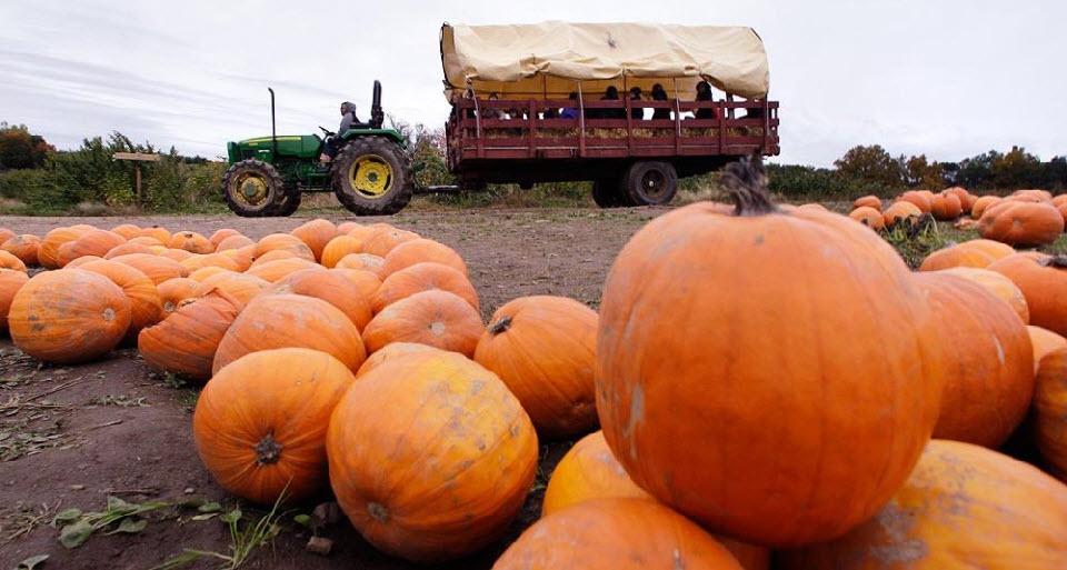 20. Трактор везет повозку с детьми по тыквенному полю на ферме Смолак в Северном Андовере, штат Массачусетс, 15 октября. (Charles Krupa, AP)