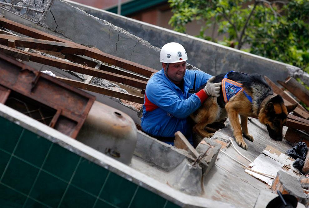 13. Спасатель из России поднимает собаку на крышу разрушенного здания в Паданге, провинция Западная Суматра, 4 октября 2009 года. (REUTERS/Nicky Loh)