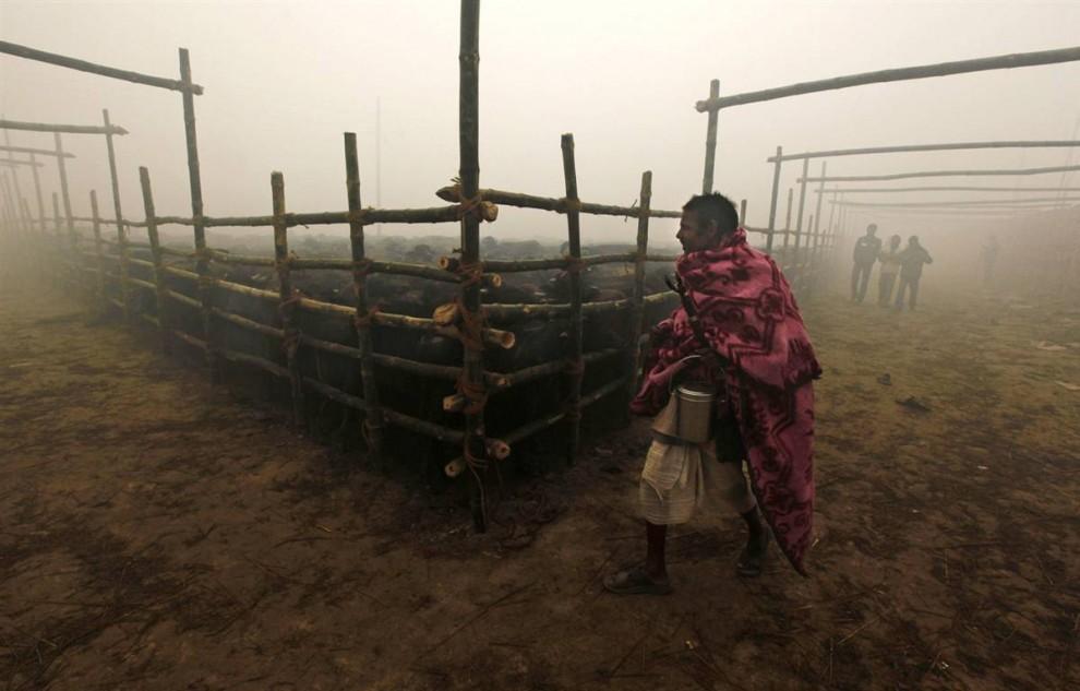 2) Orang beriman berjalan di dekat kandang kerbau dimana menunggu kematian mereka.  Menurut salah satu menteri Nepal, upacara ini adalah korban pembunuhan hewan terbesar di dunia.  (Gemunu Amarasinghe / AP)
