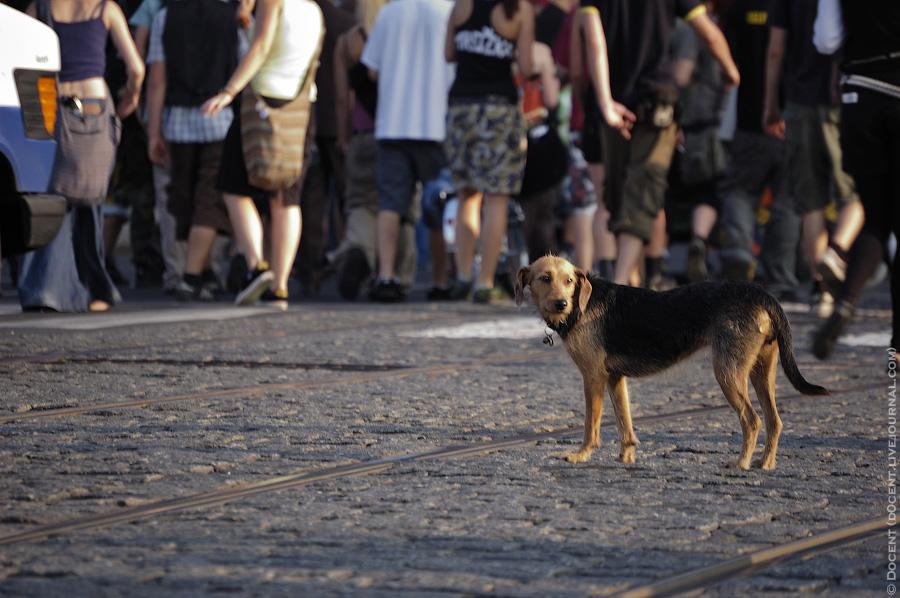 3) Собако как бы говорит нам своим видом: где я, кто все эти люди?