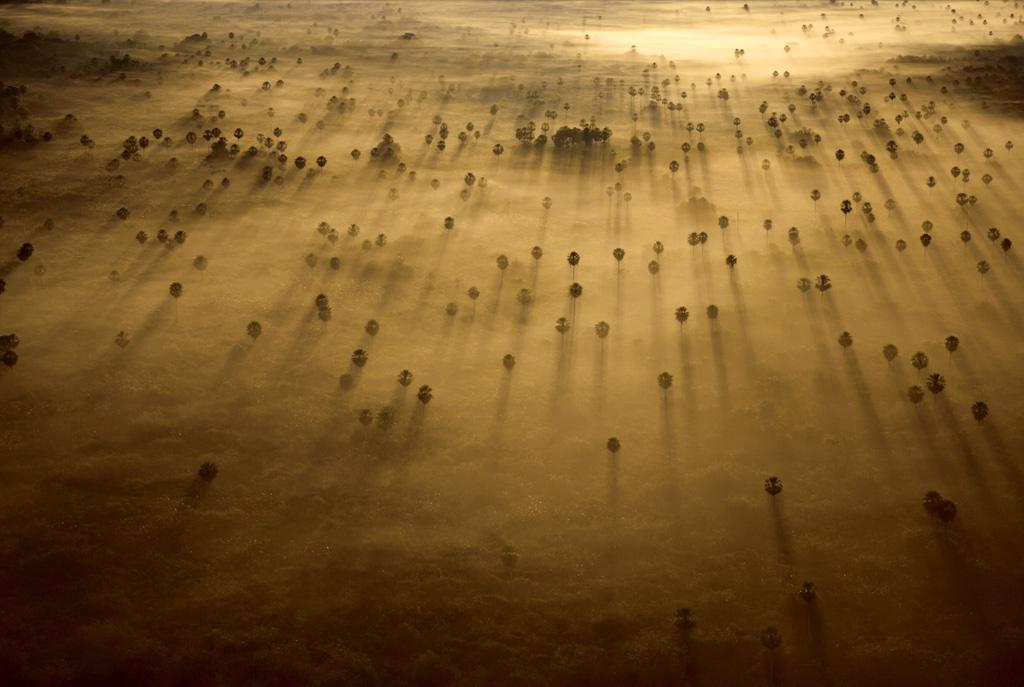 4. Пальмы проступают в утреннем тумане в Пантанале недалеко от Мато Гроссо до Сул, Бразилия. Эта огромная закрытая дельта реки образует экологически разнообразную экосистему на территории Бразилии, Боливии и Парагвая. (Robert B. Haas)