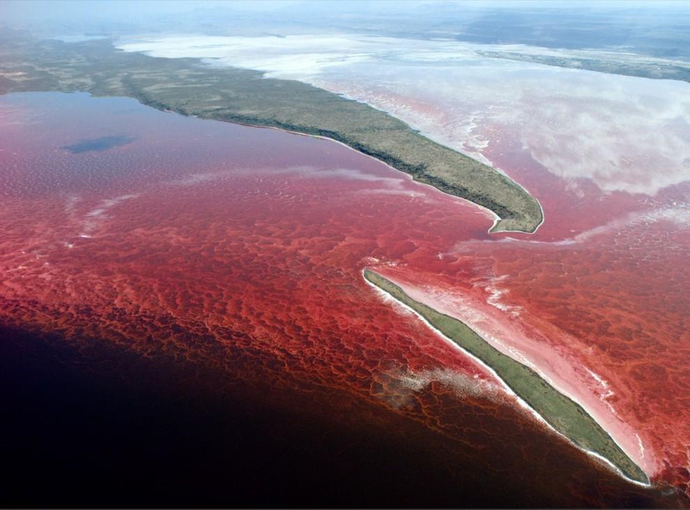 4. Кенийское озеро Магади «взорвалось» красным в результате разростания бактерий после ливня. В невероятно соленом щелочном озере мало кто живет, но это любимое место для купания птиц. (Emory Kristof)