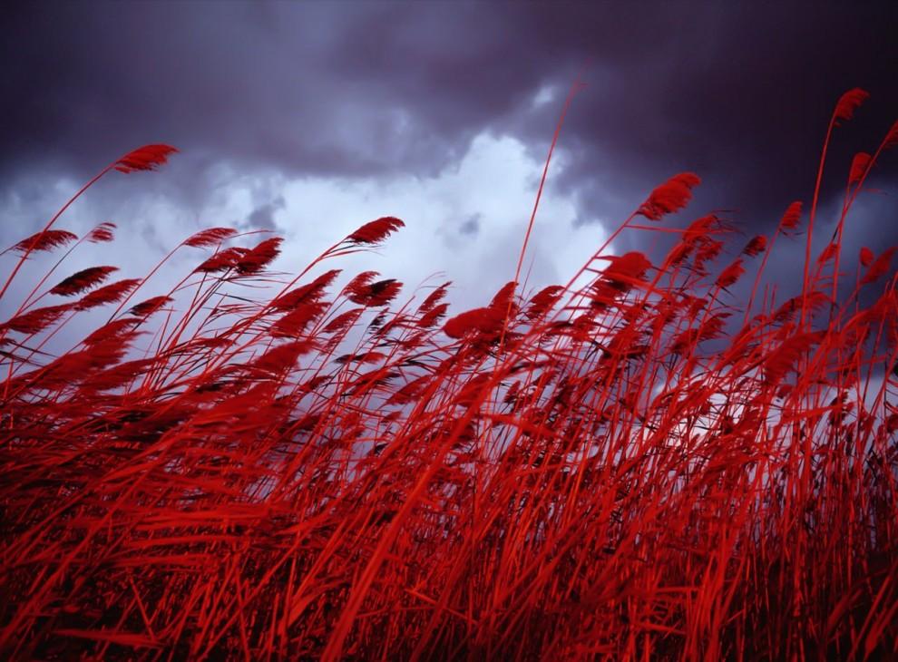 Цвета: Красный