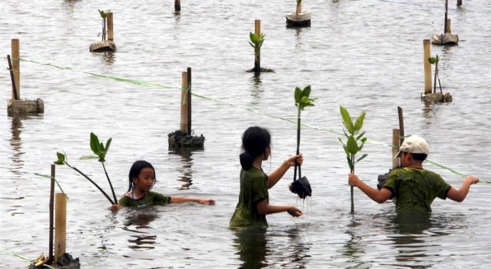 8. Школьники сажают мангровые деревья на территории заповедника в Джакарте, Индонезия. Растущие на многих побережьях, мангровые растения являются природным помощником против штормовых нагонов и даже поднимающегося уровня моря. (Bagus Indahono / EPA)