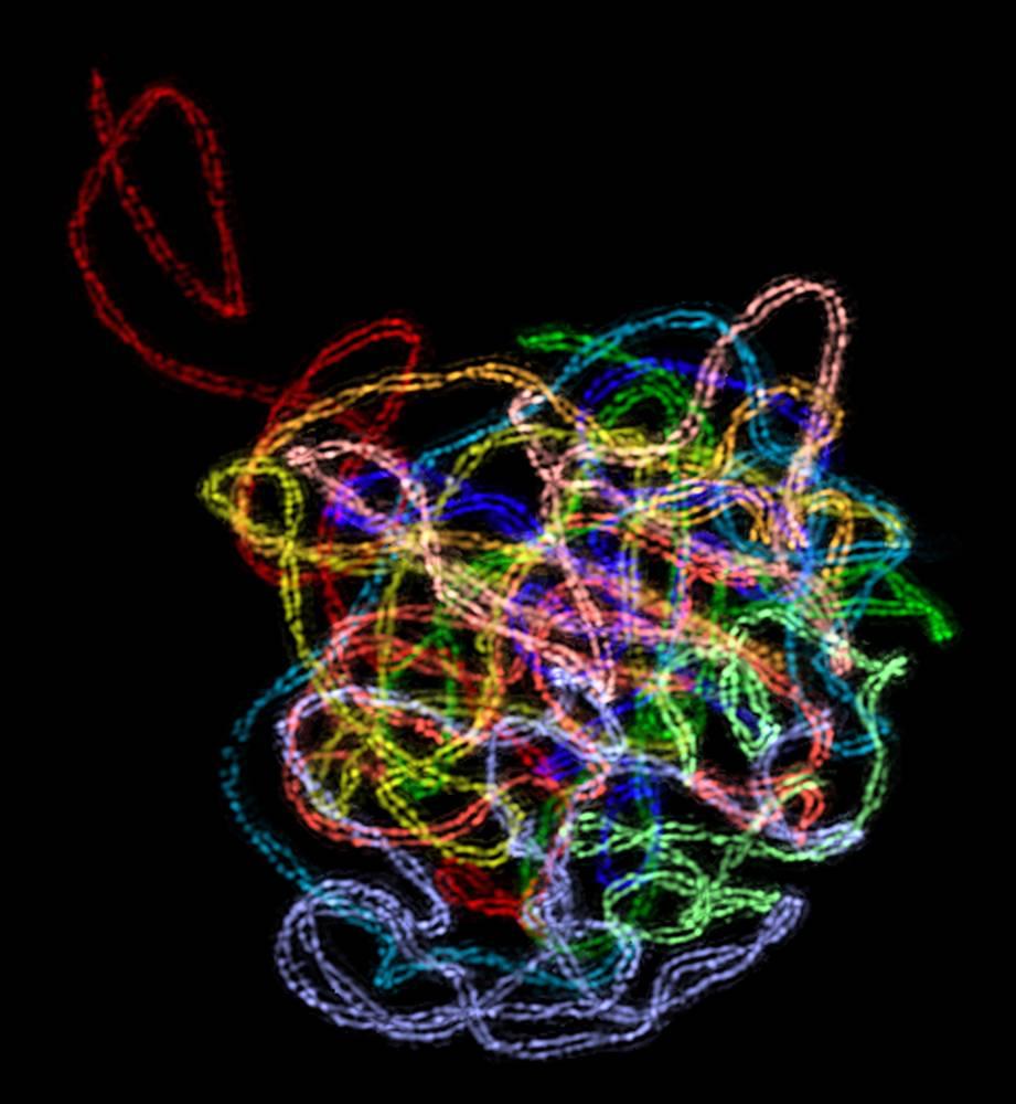 9. Этот снимок, занявший второе место, был сделан Чунь-Джу Рэйчел Вонг из Беркли. На нем вы видите ступенчатую протеиновую структуру внутри ядра растительной клетки кукурузы. Структура, известная как синаптонемный комплекс, образуется между парными хромосомами во время деления клеток. Это может быть первый трехмерный снимок с высоким разрешением, когда-либо деланный с помощью оптической микроскопии. Две параллельные оси комплекса, проходящие вдоль всей длины хромосом, представляют собой две нити на расстоянии всего 100 нанометров друг от друга и огибающие друг друга по спирали. (Chung-Ju Rachel Wang)