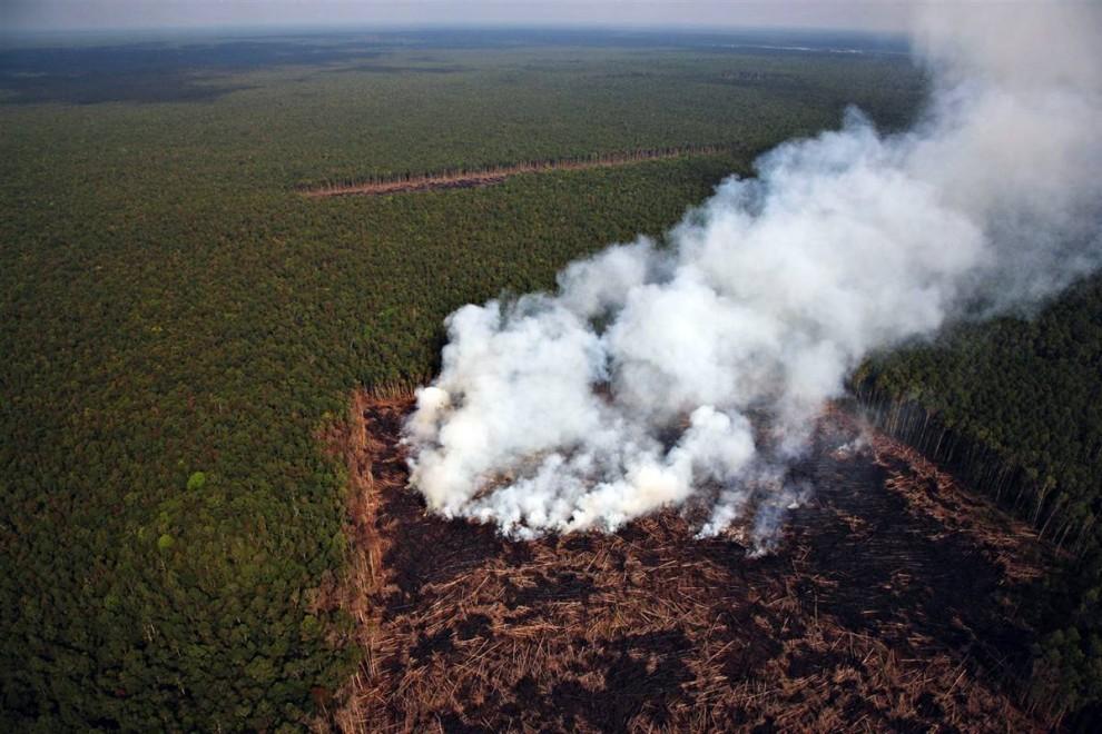 9. Вырубка лесов является главным источником парниковых газов в развивающихся странах. Эта территория леса в Индонезии была расчищена для строительства заводов по производству пальмового масла. (John Novis / Greenpeace)