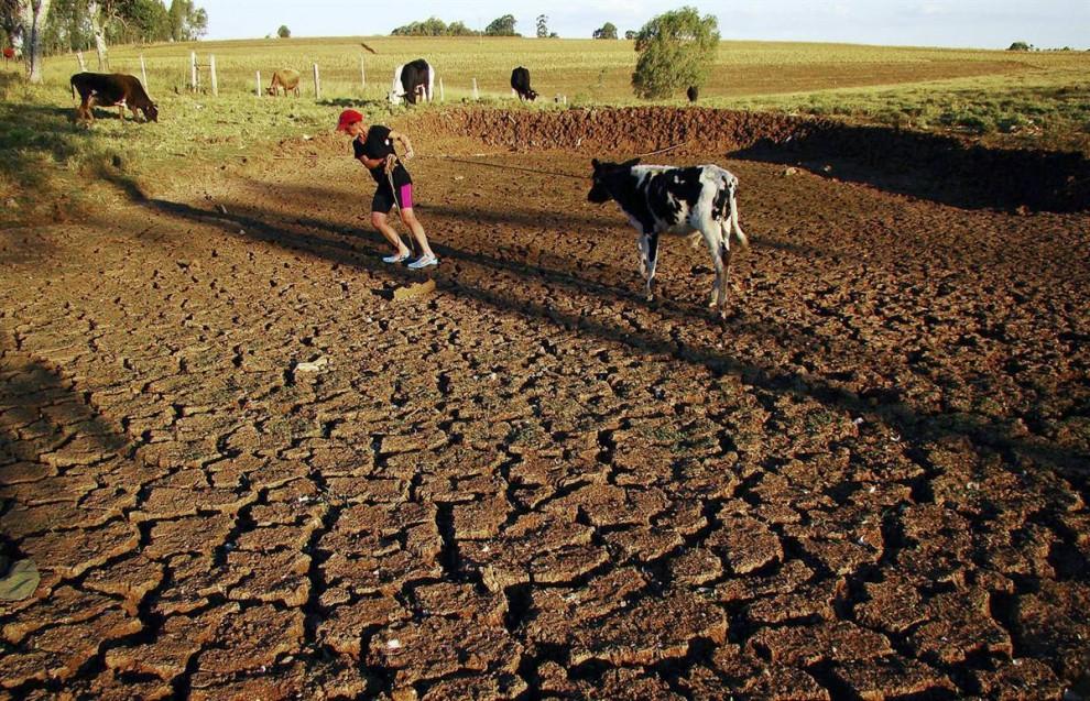 10. Эксперты предупреждают, что глобальное потепление приведет к еще более суровым засухам в таких частях мира, как южная Бразилия, где период засухи в 2009 году сделал подобные поля совершенно бесполезными. (Vagner Guarezi / AP)